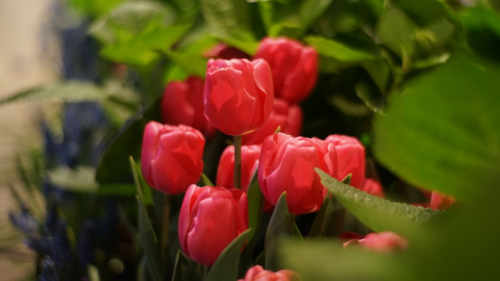 From the Philadelphia Flower Show. Shot wide open. This photo was resized but otherwise unretouched.